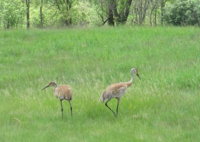 Washington County Golf Course Hole 5 Wildlife