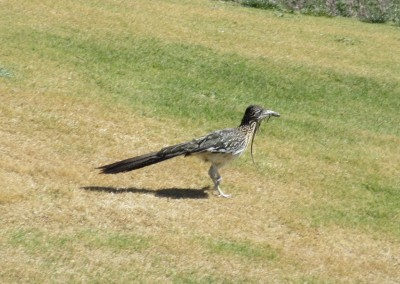 The Revere Golf Club Concord Course Hole 4 Roadrunner