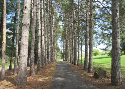 Christmas Mountain Pines Course Hole 3 Cart Path