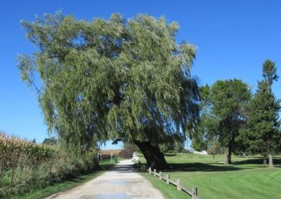 Fox Hills Resort Fox Creek Course Cart Path Tree