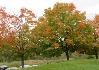 The Bog Golf Course Clubhouse Fall Colors