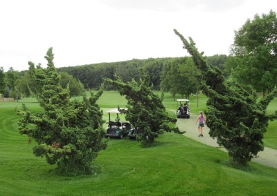 Ironwood Golf Course Bushes Tee