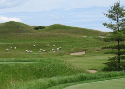 Whistling Straits Irish Course Hole 16 Sheep