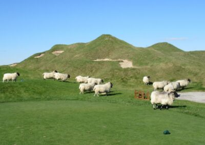 Whistling Straits - Straits Course Hole 15 Grand Strand Sheep